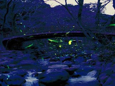 熱海梅園の蛍